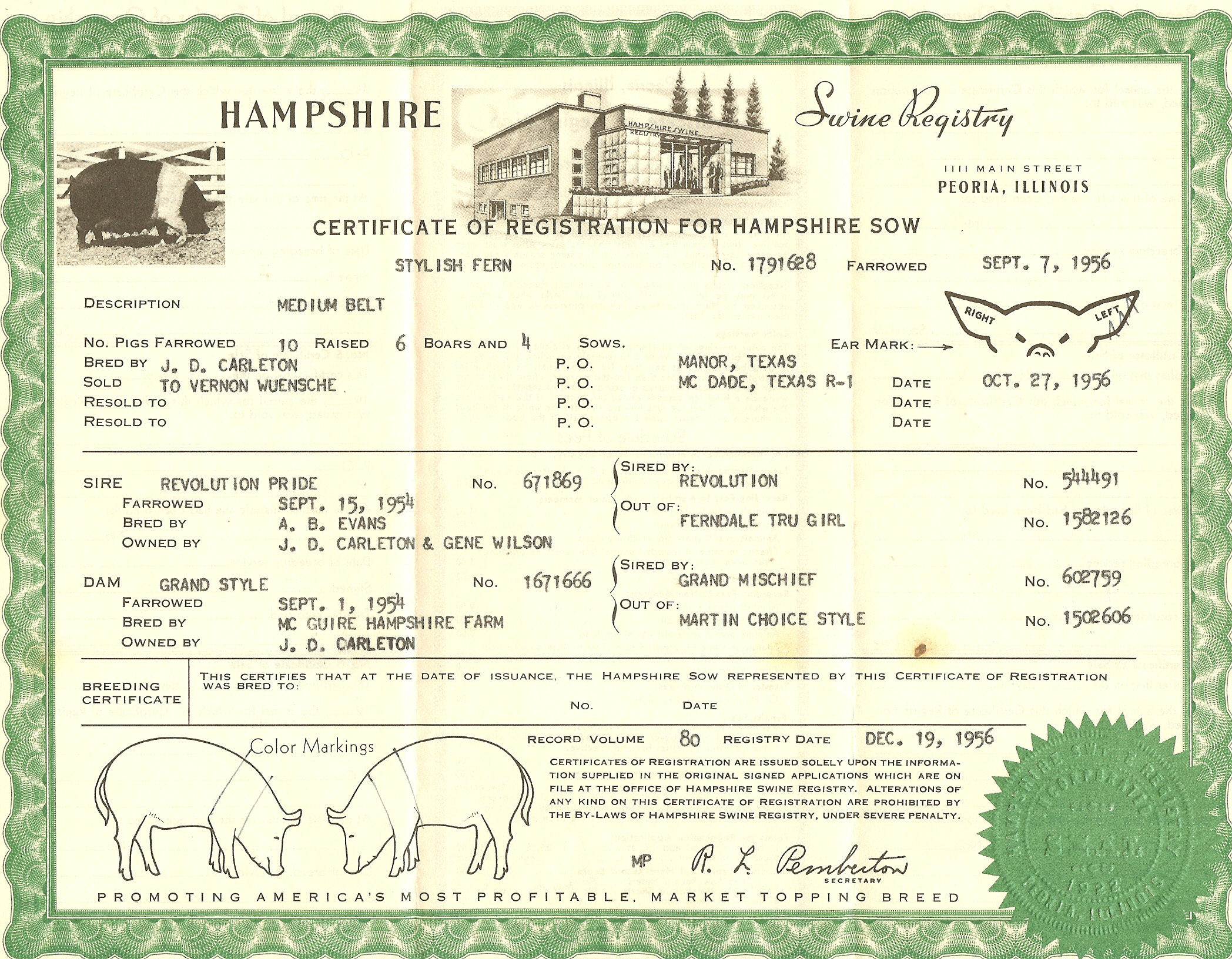registered hampshire sow