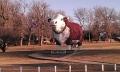 Albert the Bull Audubon